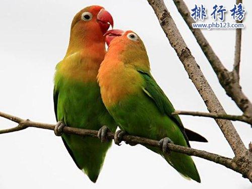 盤點常見的十種鸚鵡,第七最長壽,第一最可愛