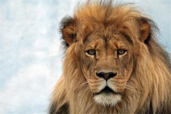 十大長跑耐力最強的動物 騾子上榜,第一絕對是無爭議
