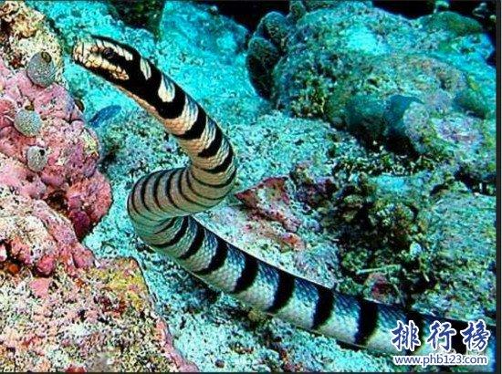 世界上最毒的蛇排名,細鱗太攀蛇一口毒死25萬隻老鼠