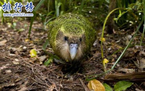 最稀有的十大動物,第一全世界甚至只有35隻。