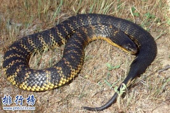 盤點蛇類世界之最,世界上最大的蛇是什麼蛇