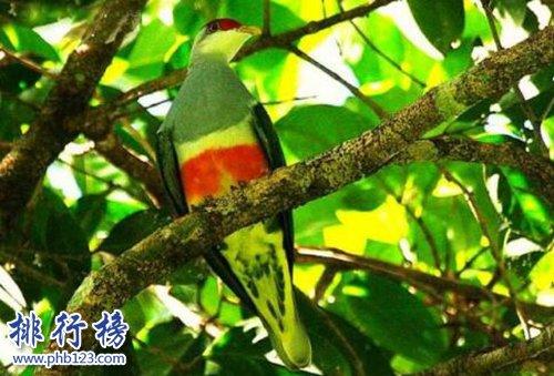 世界上十種最特別的鳥類,最後一個活體表情包