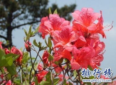中國十大名花