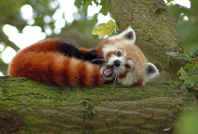 世界十大最可愛的動物 萌化你的心,個個都是小可愛