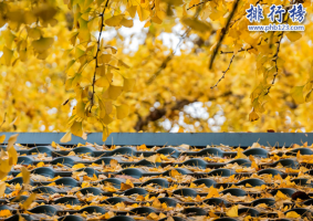 南京師範大學世界排名2019,附2個專業世界排名