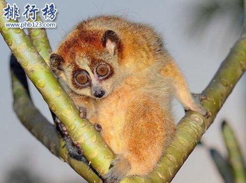 全球最慢的動物排行榜,樹懶才第四,第一慢到想打人