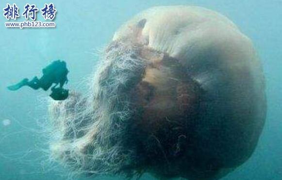 深海最恐怖的生物:冥河水母極像攝魂怪(體長可達11米)