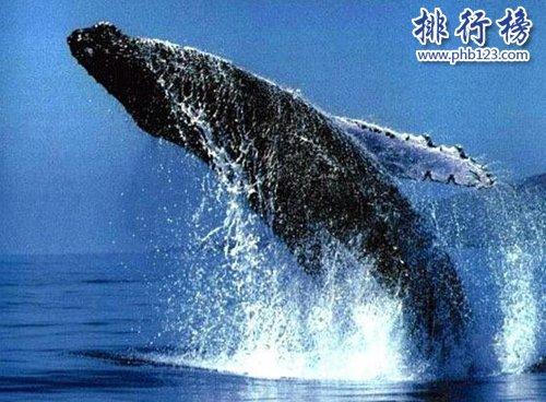 盤點懷孕時間最長的十種動物,姥鯊孕期長達三年!