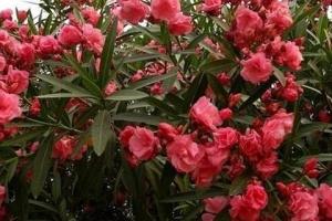 全球十大毒性最強植物,最後三種最常見,千萬小心!