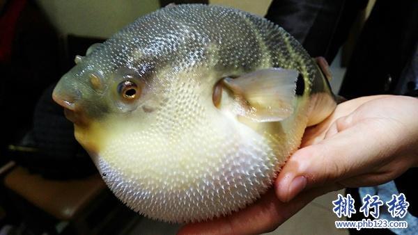 世界十大最毒的動物排行榜 毒性最強的動物盤點