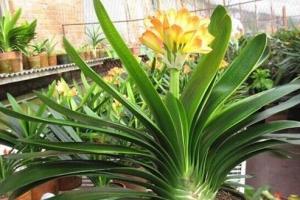 家中養什麼植物好?適合家養的十種植物!