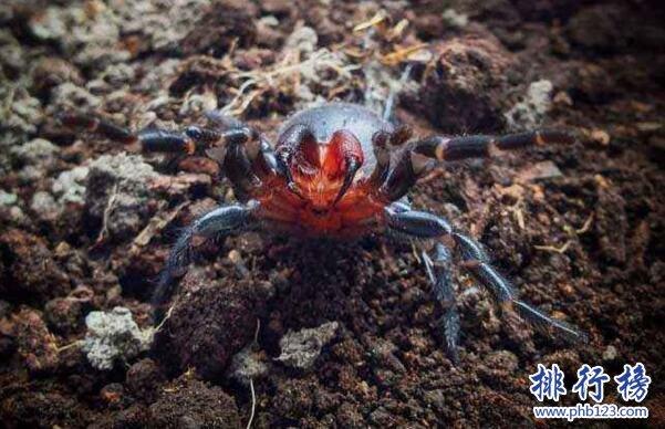世界上十大最毒的蜘蛛排名 巴西遊走蛛可使男人終生陽痿
