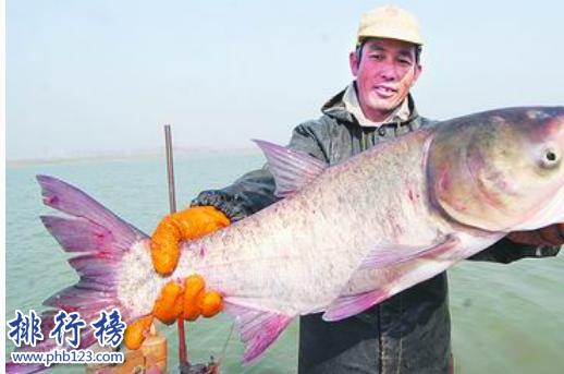 中國四大家魚:四大家魚哪四種