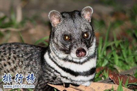 已滅絕的十大可愛動物:白鰭豚西亞虎爪哇虎都已滅絕
