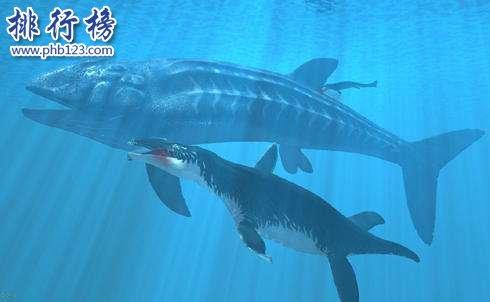 最大的硬骨魚類:利茲魚身長35米,體重如同三頭非洲象