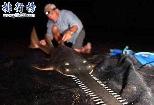 世界十大最危險的魚,第六喜歡吃人肉,第五國內常見
