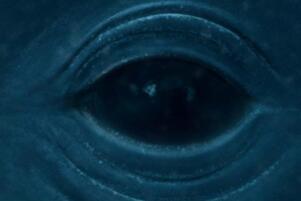 深海恐懼症是什麼 面對大海無法克制的懼怕(附深海恐懼症測試圖)
