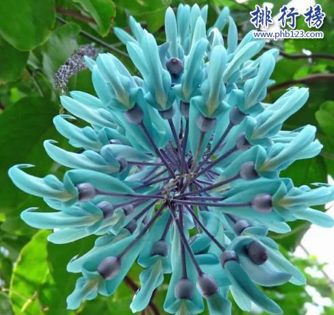世界十大最稀有的花:泰坦魔芋發屍臭,最後一種全球罕見