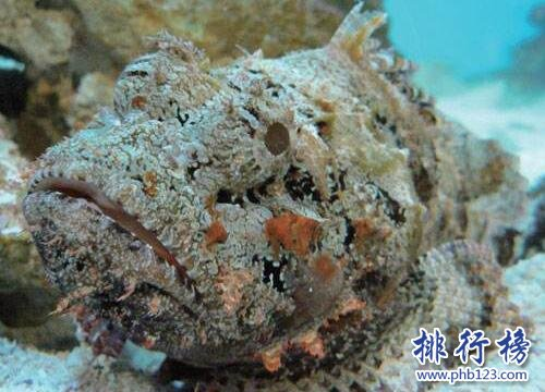 海洋十大毒物排行榜,這些深海最毒生物你都見過嗎?