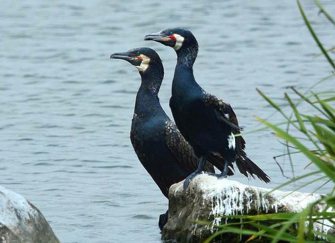 什麼鳥漂亮又與人親近?排名前10最粘人的鳥
