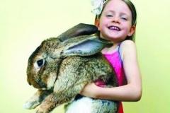 世界上最大的兔子:一年吃掉4000跟胡蘿蔔
