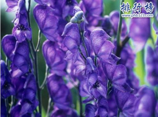 世界十大毒王植物:罌粟毒品之王最害人