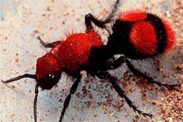世界十大奇特的昆蟲 葉蟲好像有變身的能力,第四像外星人