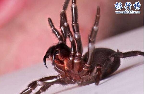 世界十大毒王排行榜 澳洲箱水母毒死人僅需30秒