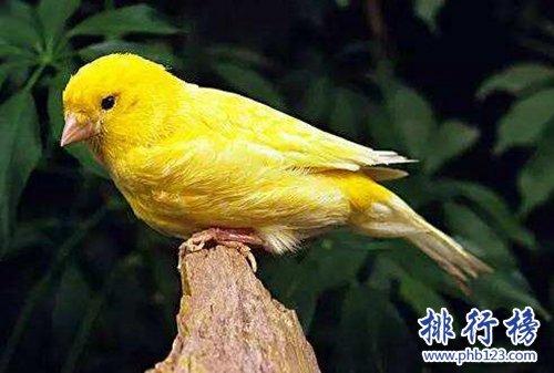 適合家養的十種鳥類,聰明又好養!