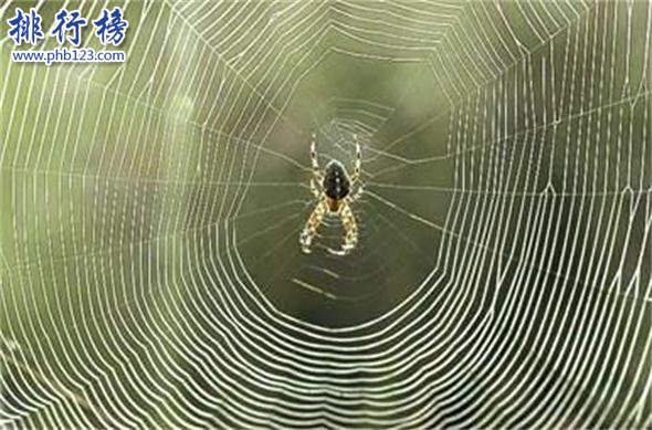 世界上最小的蜘蛛:體型0.043厘米,比句號還要小