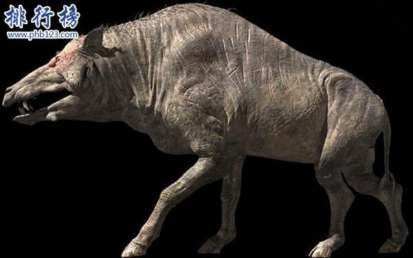 上古時期最兇猛的動物:巨豬,利齒可咬碎獵物骨頭(體型和野牛一樣大)