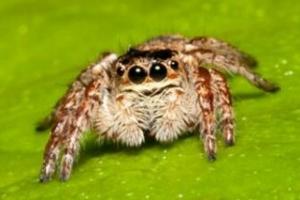 十大常見的室內蜘蛛,幽靈蛛微毒,遇到要避開!