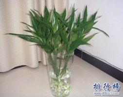 十種辦公室適合養的植物,第一種可招財!