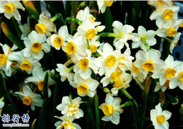 導語:花是每個女孩子都喜歡的一種可以觀賞的美麗的花卉,每一種花都有不同的花語和寓意。今天TOP10排行榜網小編為大家盤點了中國四大名花介紹,一起來看看這些美麗的花吧!  中國四大名花:牡丹、菊花、山茶、水仙  四、福建漳州的水仙  水仙又稱玉玲瓏、雪中花等多個稱呼,我們生活中常見的水仙花是白色的,其實還有一種是黃色的喇叭水仙。水仙屬於草本植物在中國已經有1000多年的歷史是中國四大名花之一,全世界有水仙花800多個品種其中只有10幾種是最好看的,這種花適合生存在溫暖濕潤的土地一般在福建漳州、廈門等地方比較常見,長得非常的秀麗還帶著清香。  水仙花的華語:  中國水仙花的花語是思念、純潔的人生、想你的寓意,西洋水仙的花語是期盼愛情、堅貞的愛情。黃水仙寓意著回憶往事重溫愛情。山水仙的寓意是欣欣向榮、美好時光的意思。  三、雲南昆明的山茶  山茶花是一種植物,樹很大葉子很茂盛開出的花也比較大的是中國傳統的花木之一。喜歡在土層深厚、有機質豐富的疏陰濕潤地生存,一般分布在雲南西部山地和滇中高原已經有1000多年的歷史,在國內有很多名貴的山茶花品種其中包括恨天高.硃砂紫袍.大紫袍等。  山茶花的花語:可愛、理想的愛、有魅力  二、浙江杭州的菊花  菊花又稱黃花、秋菊、黃華等多個稱呼屬於草本植物是經過人工培育的名貴可以觀賞的花卉,有幾千個品種是中國四大名花之一已經有3000多年的歷史,一般在浙江杭州比較常見這種花,那么的人幾乎家家戶戶都會養菊花每年的10月份會舉行花卉展覽成為全市規模最大的旅遊文化活動。  菊花的花語:清淨、我愛你、真情  一、河南洛陽的牡丹  牡丹又稱白茸、木芍藥、富貴花等多種稱呼是中國最早培育的一種花卉,喜歡生長在陽光充足排水良好的中性壤土中,我們擁有大量的牡丹花卉種植資源歷史悠久一般在洛陽、北京、銅陵等地方可以看到這種花卉。牡丹花很好看而且還有藥用價值可以養血、美容養顏、治療女性痛經等症狀。  牡丹花花語:圓滿、富貴、美麗  結語:以上就是TOP10排行榜網小編為大家盤點的中國四大名花,這些名花已經有幾千年的歷史在中國文化中有很重要的地位。