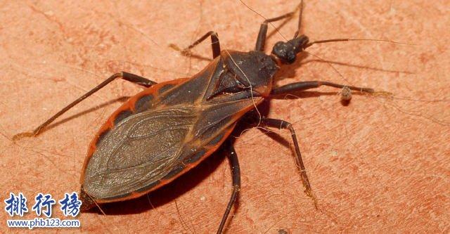 世界上最毒的蟲子有哪些?世界十大最毒蟲子排行榜