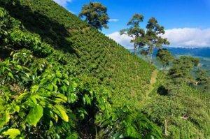 世界著名十大咖啡產地,哥倫比亞上榜,第四因瑰夏而引人矚目