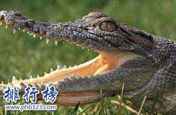 世界上十大最危險動物 第一名可能就在你身邊