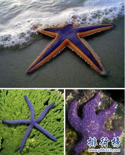 世界上十種奇特紫色動物,美的讓人驚訝(圖)