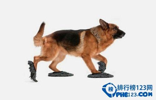寵物墩布拖鞋
