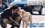 日本感人的愛情電影排行榜 感人日本電影前十名