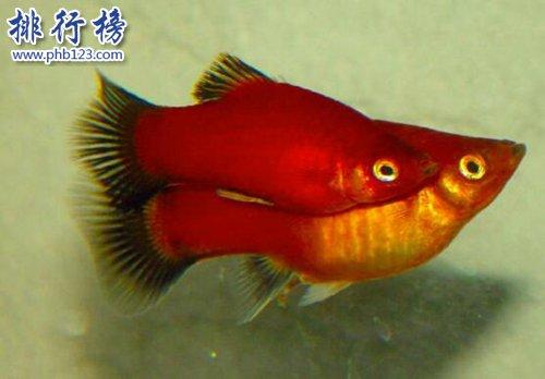 適合家養的十種魚,第二隻能獨養,第一常見!