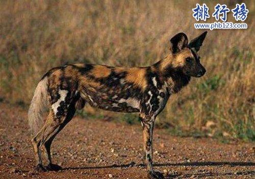 盤點十種陸地速度最快的動物,獵豹第一時速可達125公里