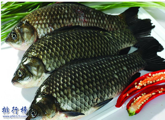 導語:據說唐朝的時候因為皇室家族姓李所以禁止養殖鯉魚,漁民們為了生存只有尋找其它品種的魚類來養殖所以就有了現在的青魚、草魚、鰱魚、鱅魚等中國四大淡水魚,今天TOP10排行榜網整理了中國四大淡水魚介紹一起來了解一下。  中國四大淡水魚:青魚、草魚、鰱魚、鯽魚  四、鯽魚  鯽魚又稱鮒魚、鯽瓜子、鯽皮子等多種叫法每個地區的名字都不一樣。是中國四大淡水魚之一,外形長得和鰱魚差不多體形是扁平的頭部很大很寬,這種魚生活在湖泊或者河水裡面以及池塘邊都有大部分在水的中上層以浮游植物為食,經常吃這種魚有助於增加記憶力營養價值高。  三、鰱魚  鰱魚是我們生活中經常見到經常食用的一種魚,鰱魚比較好養殖生活在湖泊或者池塘裡面,一般都是人工飼養的生長速度很快一般與其它魚類養在一起肉質鮮嫩營養價值高。  二、草魚  草魚又稱為草鯇、草根、黑青魚等多種名字。是生活在湖泊或者河裡面的一種淡水魚,以浮游植物、蚯蚓為食物比較活潑生長速度很快人工飼養的時候還會放入飼料據說在亞洲、歐美、非洲等國家也有草魚是中國移植過去的。  一、青魚  青魚又稱黑鯇,是一種顏色有點發青的魚,也是中國四大淡水魚之一主要生活在長江和湖泊裡面,這種魚主要是以水裡面的浮游植物為食物生長速度很快,身上的鱗片很多現在已經移植到美國、非洲、歐洲等很多國家。  結語:以上就是TOP10排行榜網小編為大家盤點的中國四大淡水魚,這些魚我們在生活中經常見到不管是做成烤魚還是紅燒的肉質鮮美十分美味而且營養價值很高。