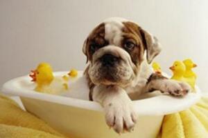 什麼寵物沐浴露好,十大寵物沐浴露品牌排行榜
