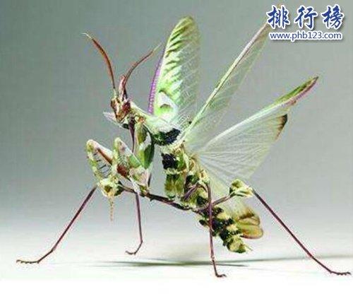 盤點全球最奇怪的十大昆蟲,個個奇特!