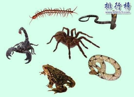 詳解五毒是哪五毒 五毒為什麼有壁虎而沒有蜘蛛