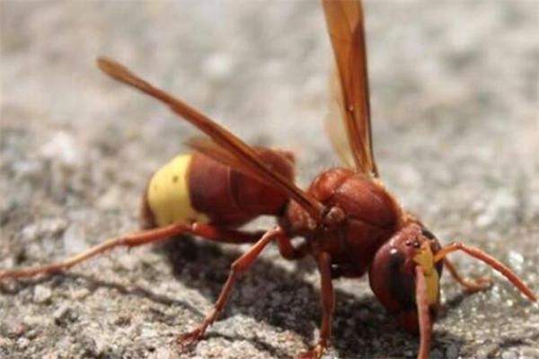 世界十大最強昆蟲 蝗蟲上榜,第三能自己轉化電能
