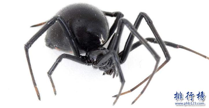 世界十大毒蟲排行榜:第二種咬傷3萬人造成經濟損失近10億