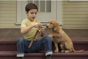 動物電影排行榜前十名 看完淚腺失控養人不如養條狗