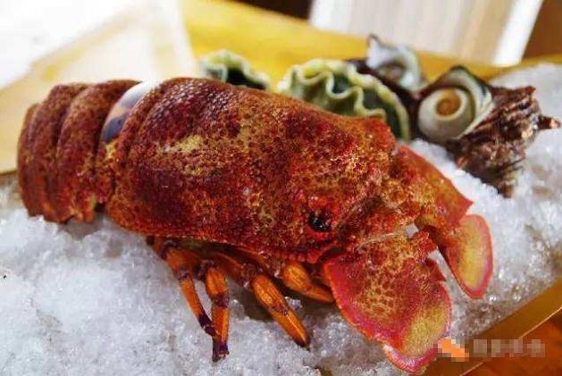 世界七大頂級的龍蝦 澳洲龍蝦僅排第五,第一為波士頓龍蝦